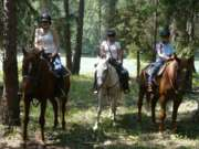 Trail Rides, Cattle Drives, Wells Gray Park, B.C.